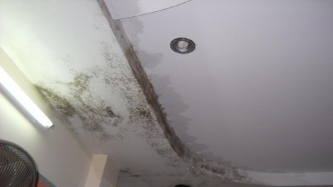 tường nhà bị ẩm mốc